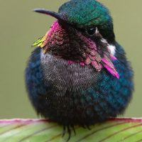 Ecuador Hummingbird Photography Tours | Expeditiontravellers.com