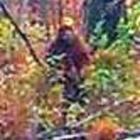 College Instructor presents conclusive scientific proof of Bigfoot at research conference